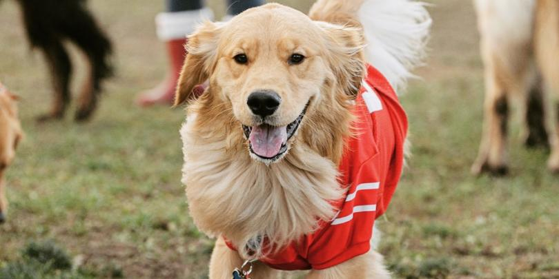 Buckeye fans come in all shapes and sizes
