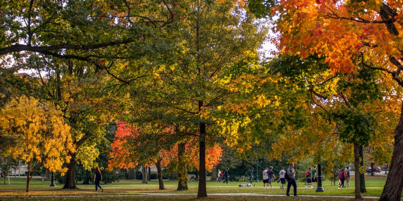 Image of trees on the oval at The Ohio State University